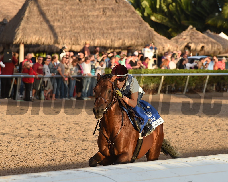 Eragon - Gulfstream January 14, 2017<br /> Coglianese Photos/Leslie Martin