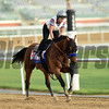 Dubai World Cup -Morning works 3/20/27, photo by Mathea Kelley/Dubai Racing Club<br /> Hoppertunity DWC