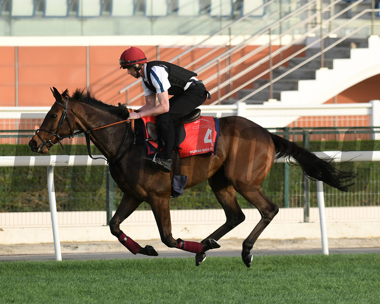Dubai World Cup -Morning works 3/22/17, photo by Mathea Kelley/Dubai Racing Club<br /> Quest for More, Gold Cup
