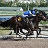 Jay's Way - AOC, Gulfstream Park, December 26, 2017<br /> Coglianese Photos/Leslie Martin