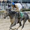 Battle Midway wins the 2017 More To Tell Stakes<br /> Coglianese Photos/Joe Labozzetta