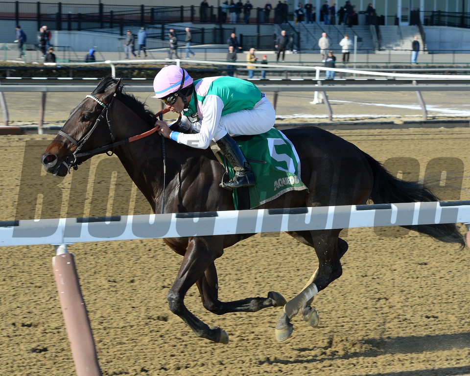 Lockdown wins the Busanda Stakes at Aqueduct Racetrack on January 15, 2017.