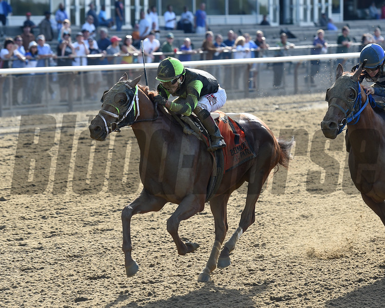 Celtic Chaos wins the 2017 Affirmed Success Stakes<br /> Coglianese Photos/Chelsea Durand