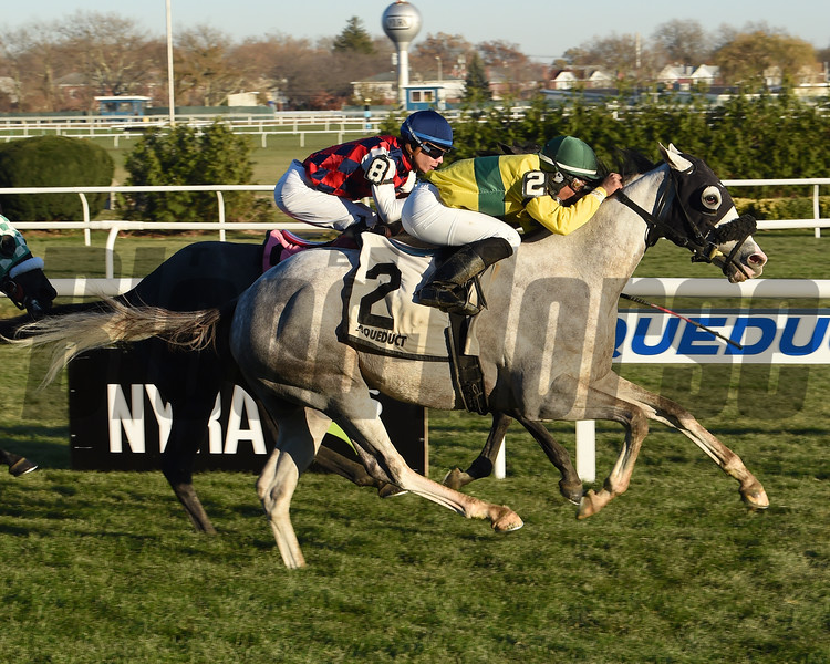 Small Bear wins the 2017 Gio Ponti Stakes<br /> Coglianese Photos