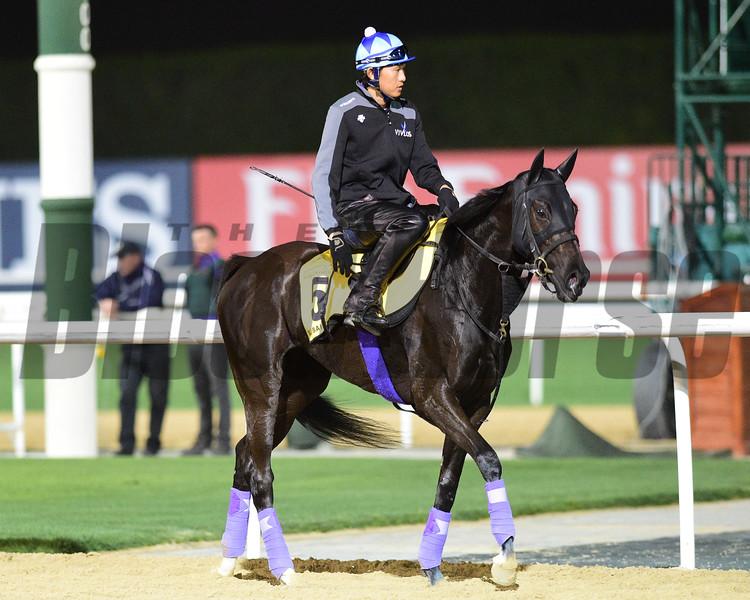 Dubai World Cup -Morning works 3/22/17, photo by Mathea Kelley/Dubai Racing Club<br /> Vivlos, Dubai Turf