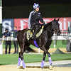 Dubai World Cup -Morning works 3/22/17, photo by Mathea Kelley/Dubai Racing Club<br /> Vivlos, Dubai Turf