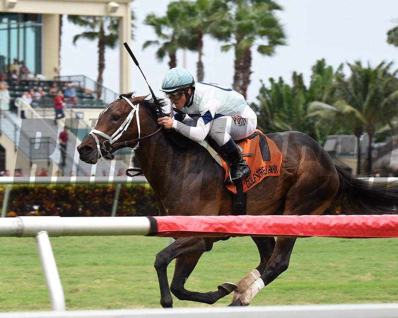 Made You Look wins the 2017 Dania Beach Stakes<br /> Coglianese Photos/Lauren King