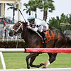 Made You Look wins the 2017 Dania Beach Stakes<br /> Coglianese Photos/Lauren King
