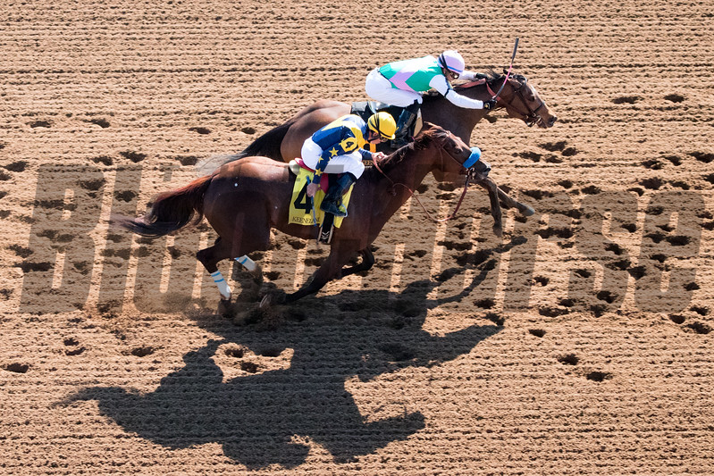 Paulassilverlining with Jose Ortiz aboard wins The 16th Running of The Madison (G1) at Keeneland on April 8, 2017 Keeneland in Lexington, Ky.