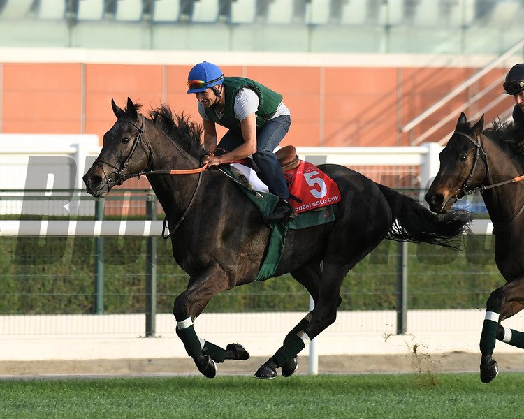 Dubai World Cup -Morning works 3/22/17, photo by Mathea Kelley/Dubai Racing Club<br /> Vazirabad, Dubai Gold Cup