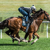 Lady Eli with regular jockey Irad Ortiz Jr., foreground works in tandem with Antonoe with exercise rider Walter Milazquez at the Oklahoma Training Center track Sunday Aug. 20, 2017 in Saratoga Springs, N.Y. Photo: Skip Dickstein