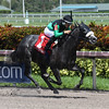 Kroy; Bear's Den Stakes; Gulfstream Park; 2017; $100,000