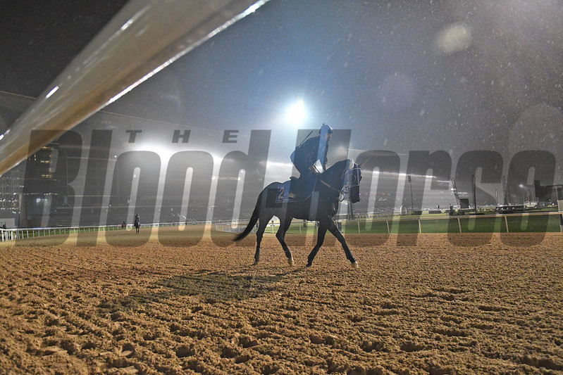 Dubai World Cup -Morning works 3/22/17, photo by Mathea Kelley/Dubai Racing Club<br /> Kafuji Take, Godolphin Mile