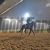 Dubai World Cup -Morning works 3/22/17, photo by Mathea Kelley/Dubai Racing Club<br /> Kafuji Take, Godolphin Mile