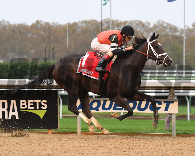 Lucy N Ethel wins the 2017 Pumpkin Pie Stakes<br /> Coglianese Photos/Rob Mauhar