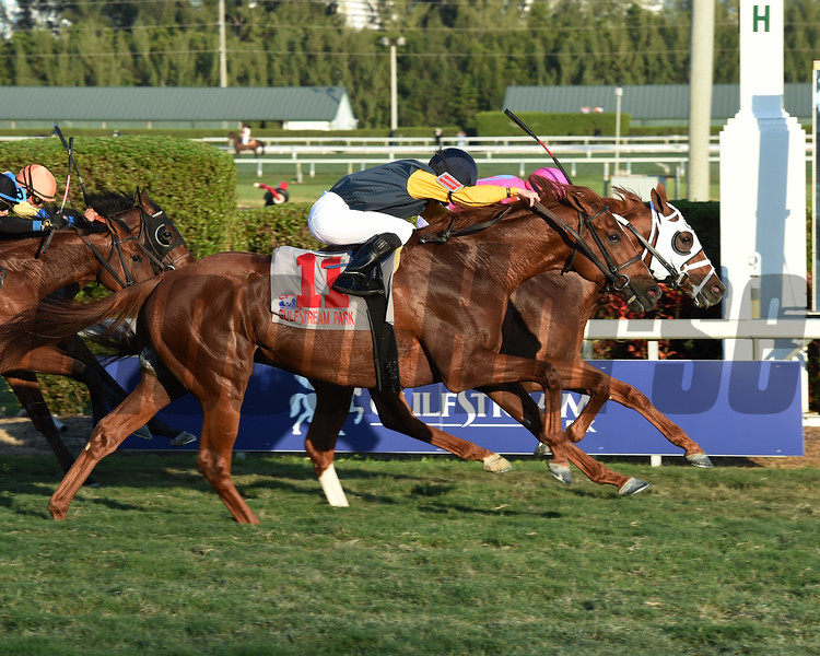 Taghleeb wins the 2017 Pegasus World Cup<br /> Coglianese Photos/Leslie Martin