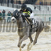 She's So Fine wins the 2017  Karakorum Elektra Stakes<br /> Coglianese Photos/Joe Labozzetta
