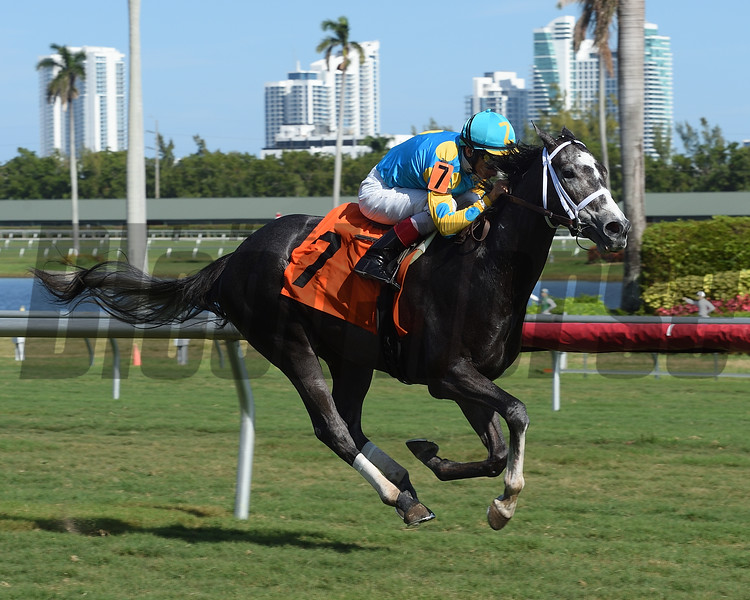 Gidu - Maiden Win, Gulfstream Park, December 23, 2017<br /> Coglianese Photos/Leslie Martin