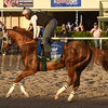 California Chrome - Gulfstream January 14, 2017<br /> Coglianese Photos/Leslie Martin