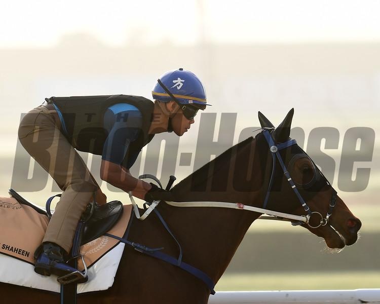 Dubai World Cup -Morning works 3/22/17, photo by Mathea Kelley/Dubai Racing Club<br /> Dundonnell, Dubai Golden Shaheen