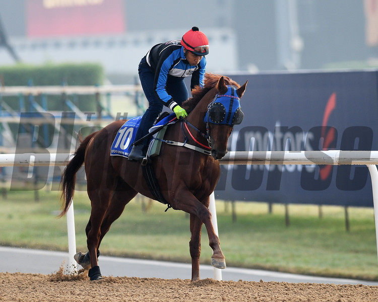 Dubai World Cup -Morning works 3/23/17, photo by Mathea Kelley/Dubai Racing Club<br /> Triple Nine, Godolphin Mile