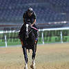 Dubai World Cup -Morning works 3/22/17, photo by Mathea Kelley/Dubai Racing Club<br /> Epicharis, UAE Derby