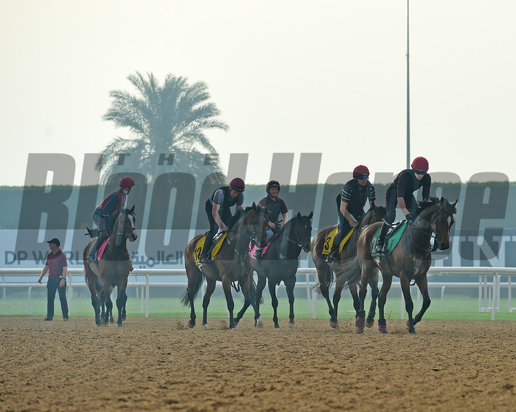 Dubai World Cup -Morning works 3/23/17, photo by Mathea Kelley/Dubai Racing Club<br /> Ballydoyle Trained Horses