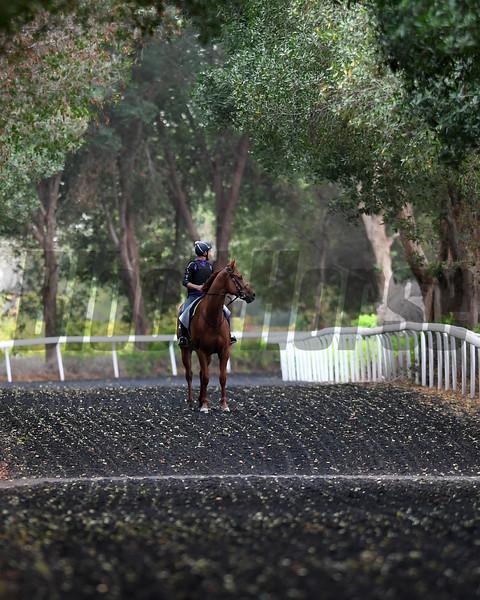 Dubai World Cup -Morning works 3/24/17, photo by Mathea Kelley/Dubai Racing Club<br /> Medicean Man, Al Quoz Sprint