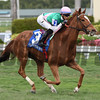 Suffused wins the 2017 The Very One Stakes<br /> Coglianese Photos