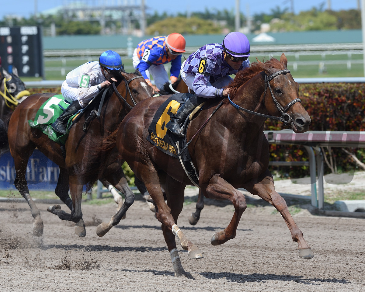 The Truth Or Else wins the $100,000 Sir Shackleton Stakes at Gulfstream Park on April 1, 2017