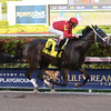 Bold Envoy - AOC, Gulfstream Park, December 8, 2017<br /> Coglianese Photos/Lauren King
