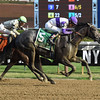 Cause We Are Loyal wins the 2017 Seeking the Ante Stakes<br /> Coglianese Photos/Lauren King