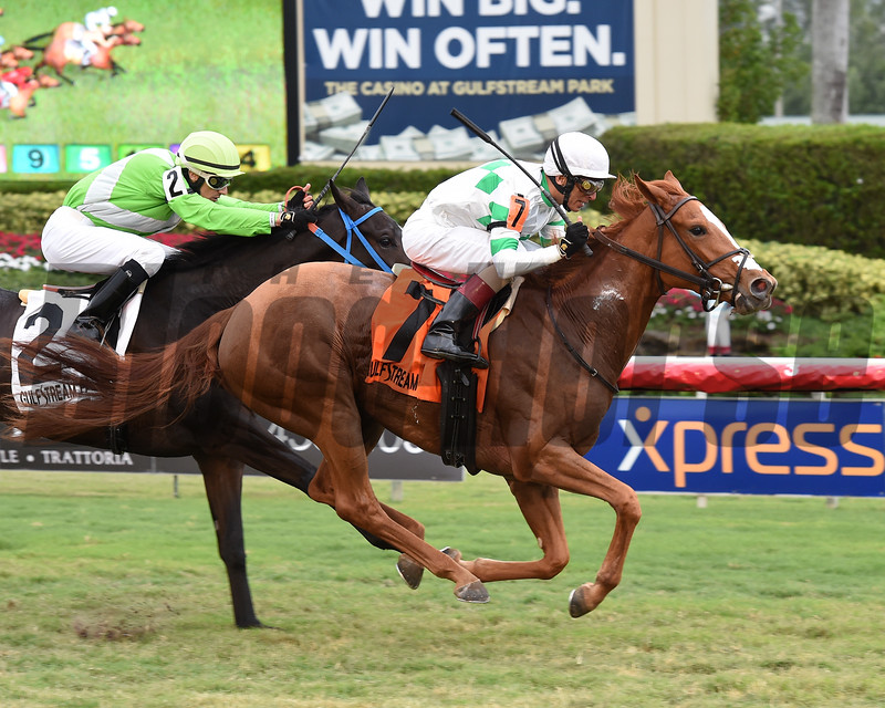 Bellavais wins the 2017 Ginger Brew<br /> Coglianese Photos/Leslie Martin