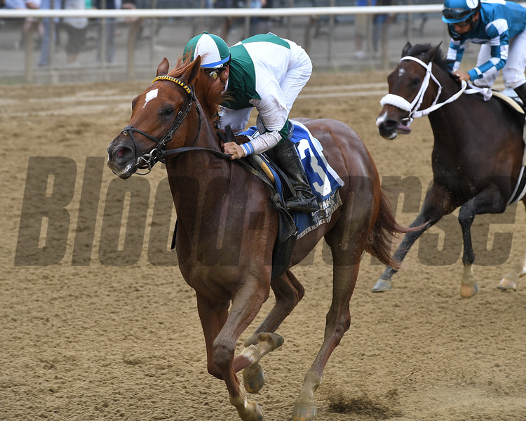 Happy Like a Fool wins the 2017 Matron Stakes (G3)