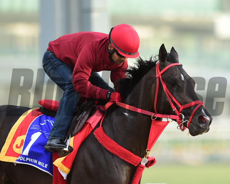 Dubai World Cup -Morning works 3/22/17, photo by Mathea Kelley/Dubai Racing Club<br /> Sharp Azteca, Godolphin Mile