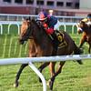 Raucous wins the 2017 Chelsey Flower Stakes<br /> Coglianese Photos/Joe Labozzetta