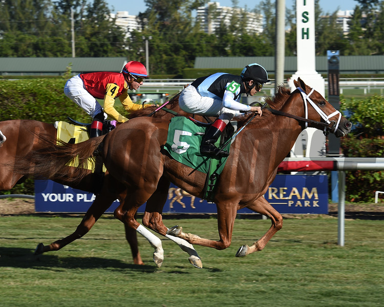 Your Only Man - Maiden Win, Gulfstream Park, December 13, 2017    <br /> Coglianese Photos/Leslie Martin