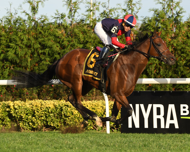 Raucous wins the 2017 Chelsey Flower Stakes<br /> Coglianese Photos/Rob Mauhar