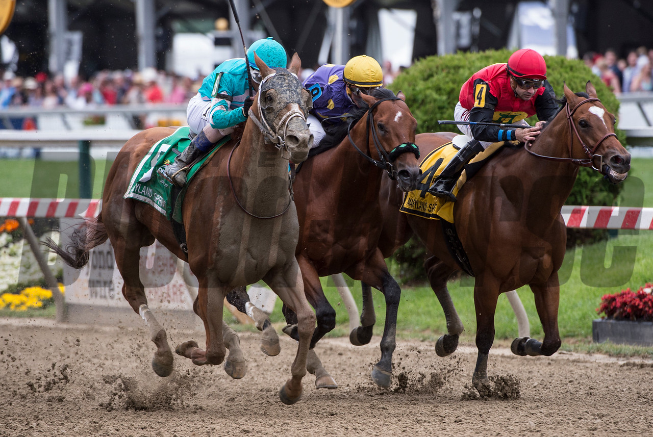 Whoitmore with jockey Richardo Santana Jr. passes other members of the field to win the 31st running of the Maryland Sprint Stakes GIII at Pimlico Race Course May 20, 2017 in Baltimore, MD.  Photo by Skip Dickstein