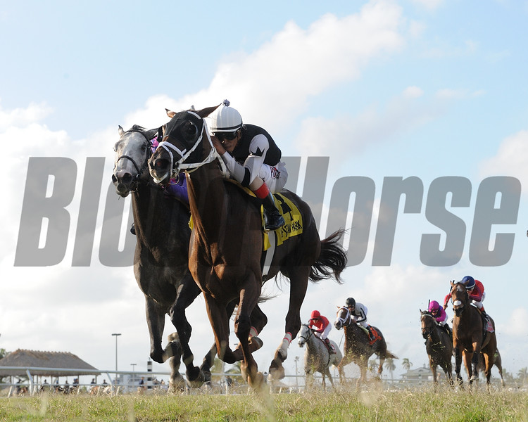 Cali Thirty Seven wins the $100, 000 Powder Break  Stakes at Gulfstream Park on April 29 2017