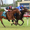 Creative Courage - Maiden Win, Gulfstream Park, January 7, 2017<br /> Coglianese Photos/Andie Biancone