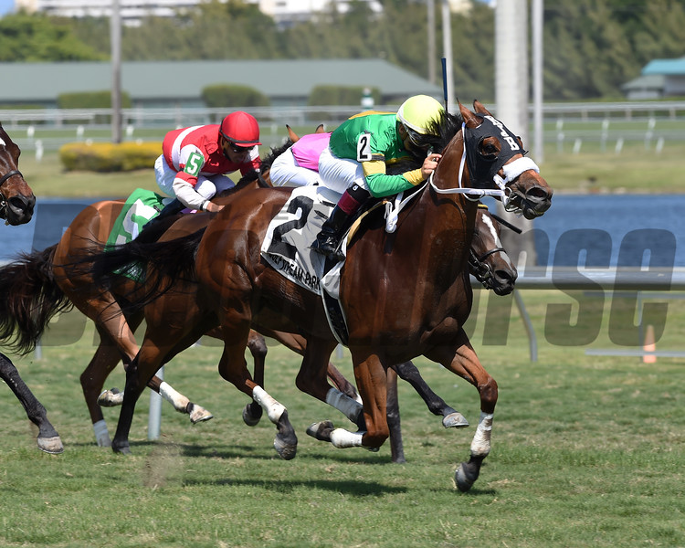 Pretty Perfection wins the 2017 Captiva Island Stakes<br /> Coglianese Photos/Lauren King