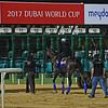 Dubai World Cup -Morning works 3/23/17, photo by Mathea Kelley/Dubai Racing Club   Arrogate, Dubai World Cup