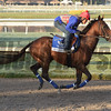 Eragon- Gulfstream Park, January 26, 2017<br /> Coglianese Photos/Leslie Martin
