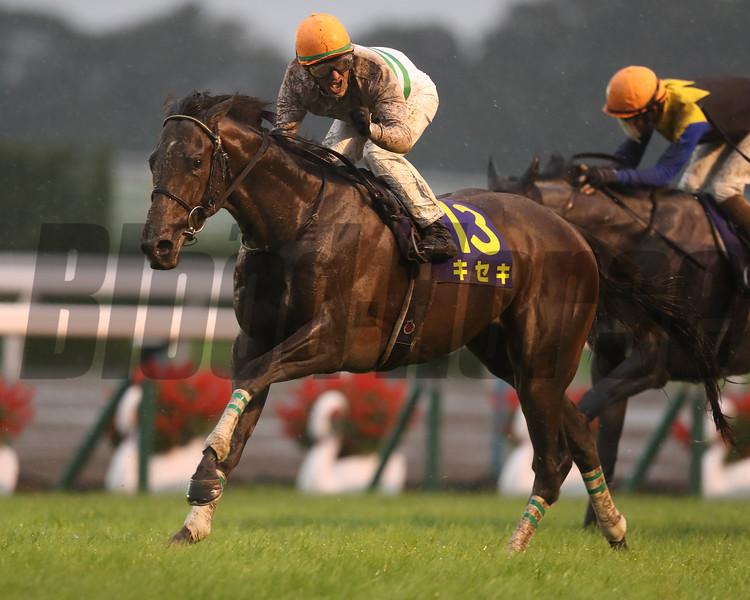 Kiseki, Mirco Demuro, Kikka Sho, G1, Kyoto Racecourse, October 22 2017