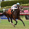 Made You Look wins the 2017 Dania Beach Stakes<br /> Coglianese Photos