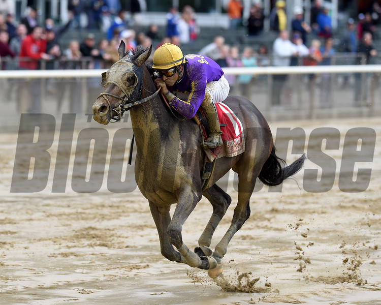 T Loves a Fight wins $125,000 the Mike Lee Stakes at Belmont Park on May 29 2017