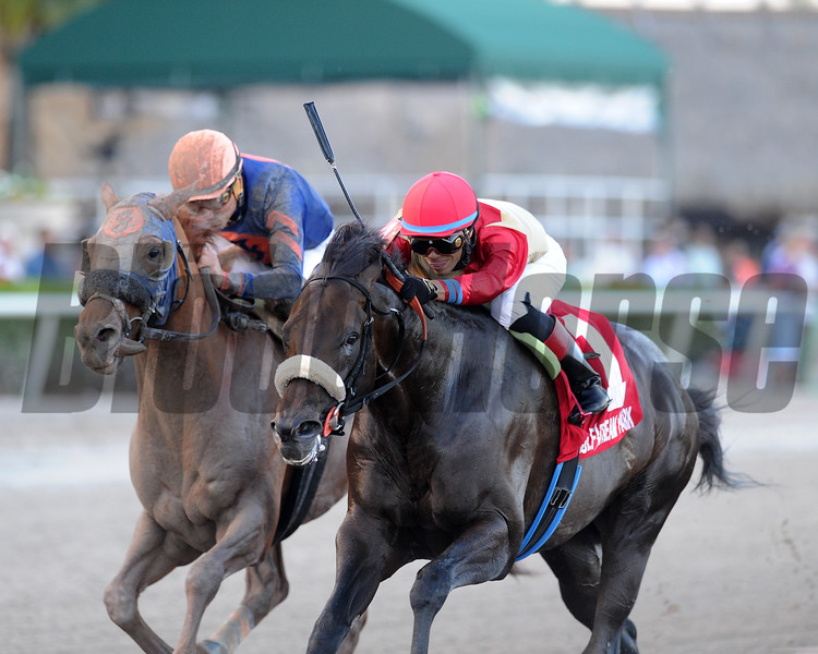 Unified wins the 2017 Gulfstream Park Sprint <br /> Coglianese Photos/Kenny Martin