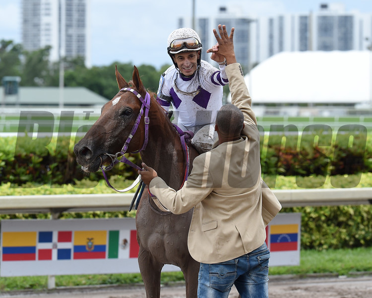 El Tigre Mono, $100,000, Confraternity Caribbean Cup Stakes, Gulfstream Park, December 9 2017
