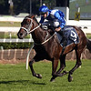 Winx takes her 17th consecutive win in the Group 1 $4 million Longines Queen Elizabeth Stakes at Royal Randwick in Sydney on April 8 2017